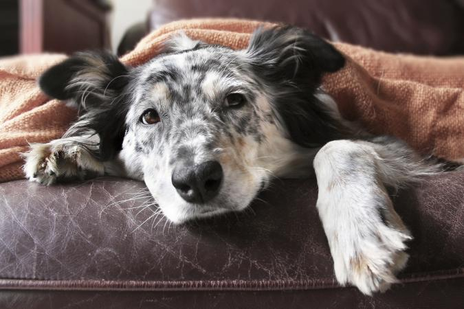 Hospice now available for man's best friend