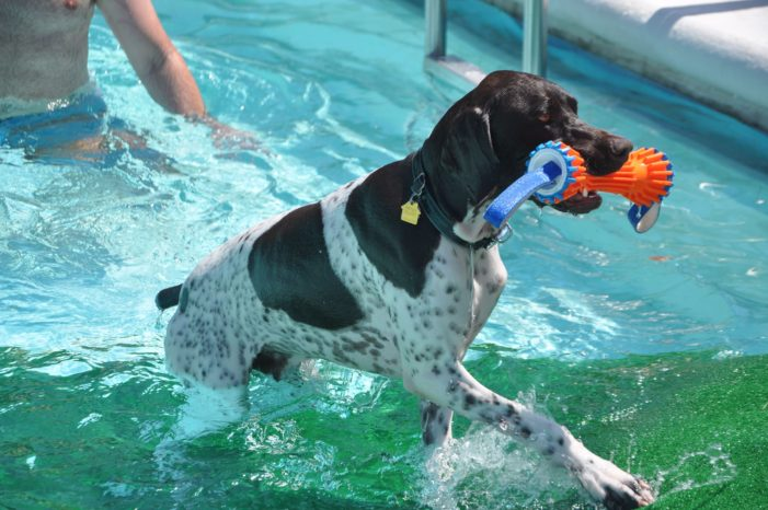 Lake Highlands site of pooch pool party