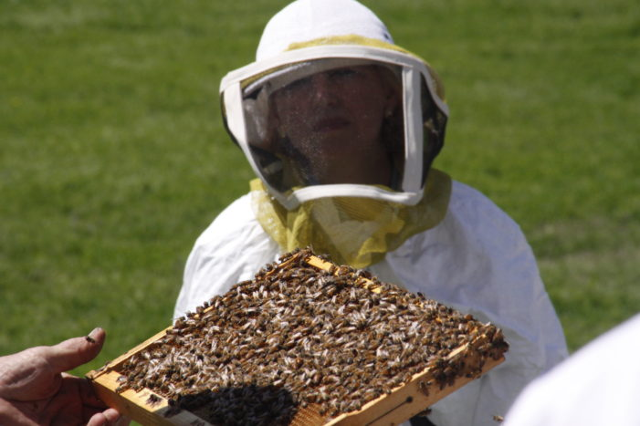 Bees can ease taxes