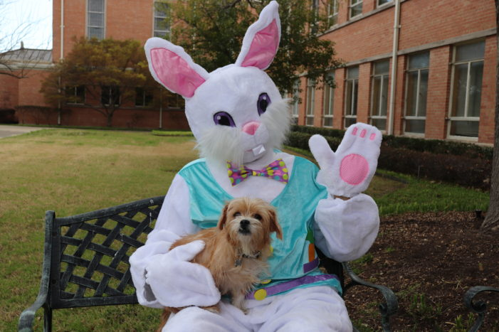 Church offers a dog park Easter