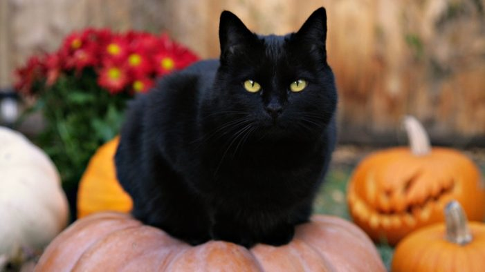 Black cats are lucky in other countries